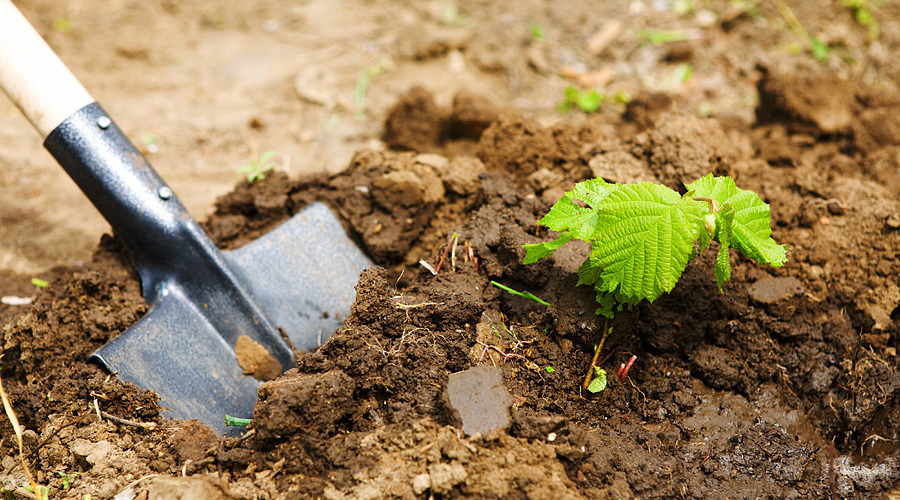 Soil Probes in Your Landscape
