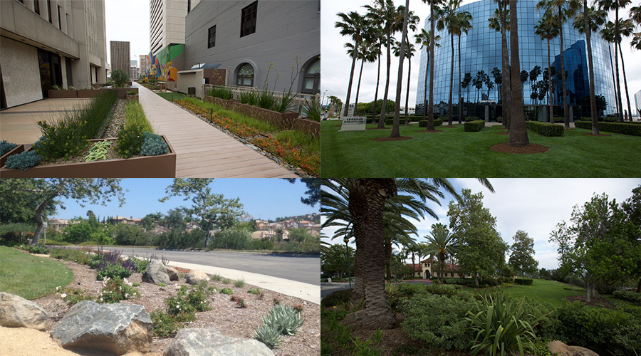 Clca San Diego Honors Top Landscape Contractors With