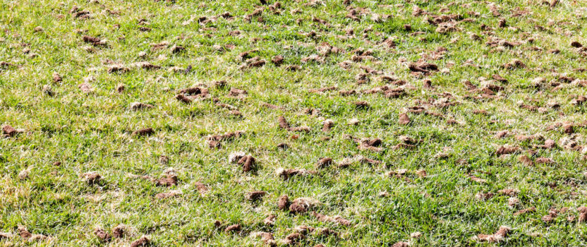 The Importance of Aerating Turf