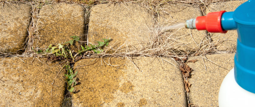 Weed Control: The Difference Between Pre & Post-Emergents