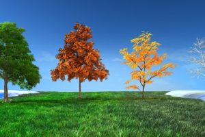 Cool Season vs Warm Season Turf – What's The Difference?