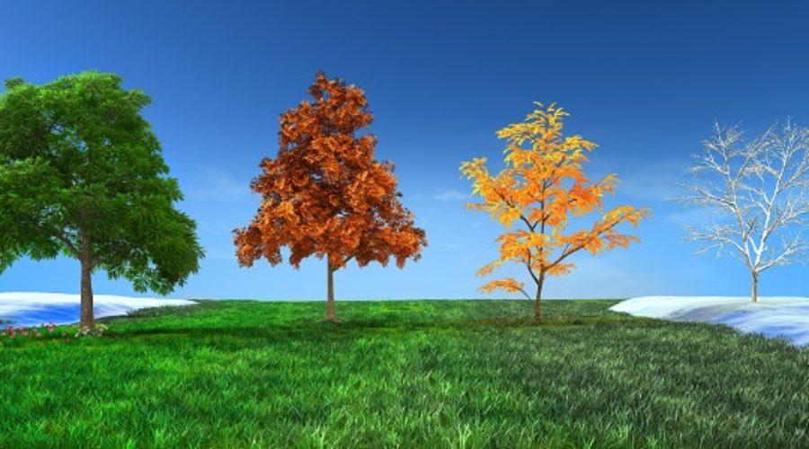 Cool Season vs Warm Season Turf – What's The Difference?