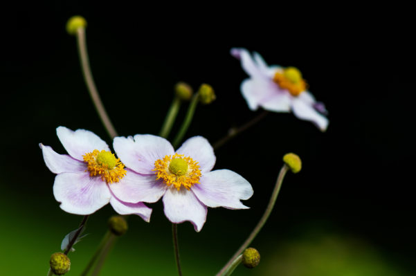 Using Native Plants in Landscaping