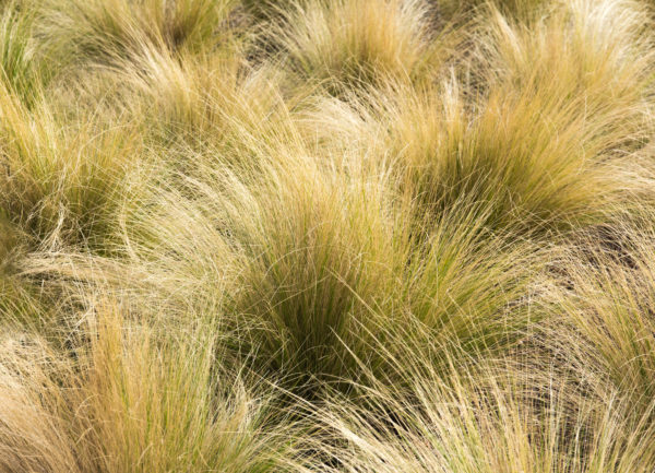 How to Maintain Ornamental Grass