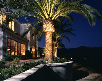 Cielo palm -night