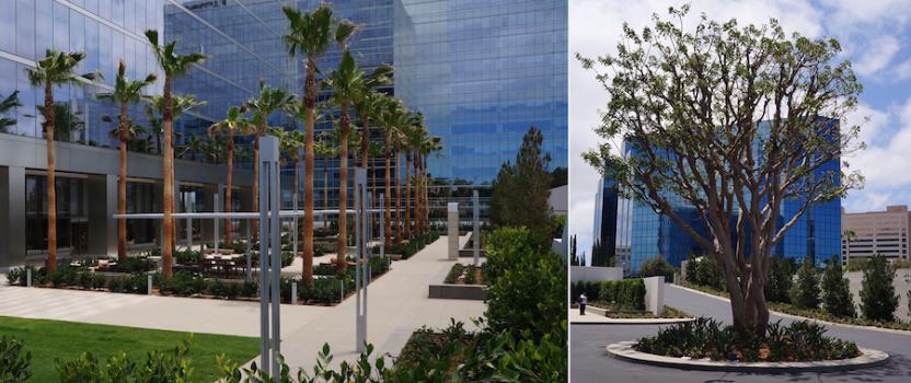 """Setting the Standard for Irvine Company's """"La Jolla Centre Superblock"""""""