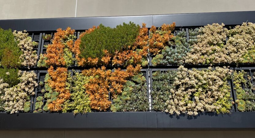 The Many Uses & Benefits of Living Walls
