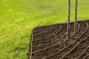 Summer Landscape Maintenance: How to Conserve Water and Keep Water Costs Down in Hotter Temperatures